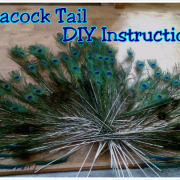 peacock tail step 1 tutorial